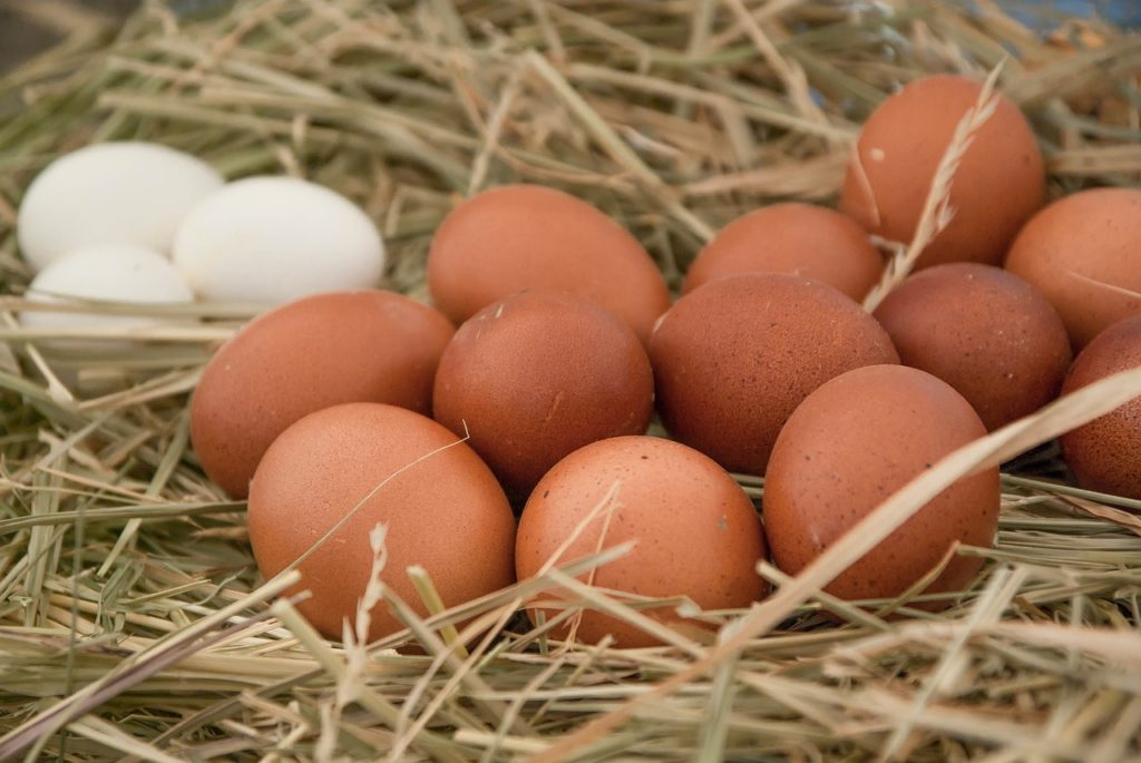 Selbstversorgung Eier - Geflügel halten