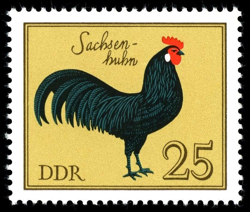 Sachsenhuhn Briefmarke - Sachsenhühner