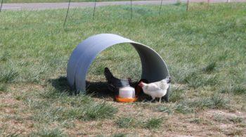 huehnerfreilauf - Hühnerauslauf