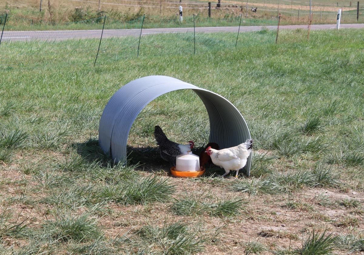 Hühnerfreilauf